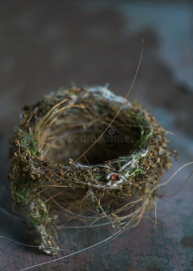 Ninho escuro e temperamental do ` s do pássaro imagens de stock