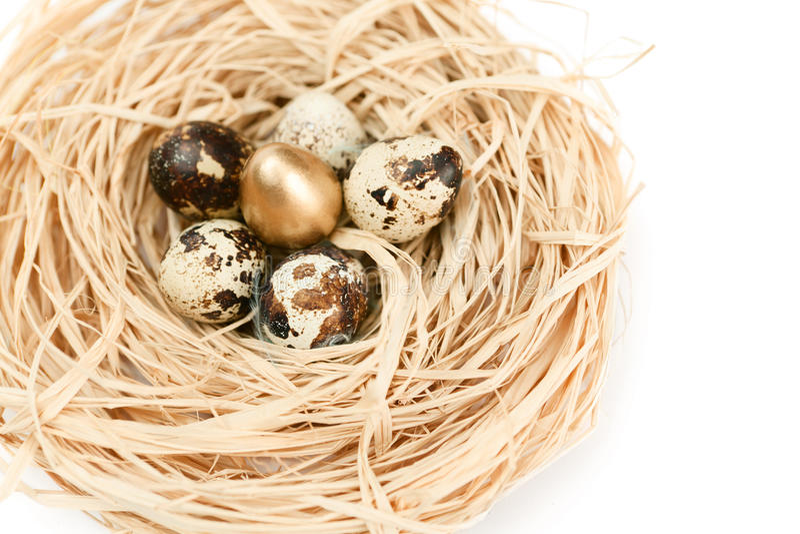 Ninho miraculoso com os ovos de codorniz dourados e naturais imagem de stock