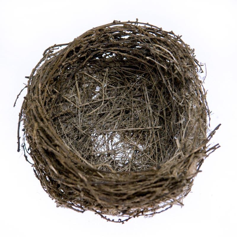 Ninho natural real vazio do pássaro imagem de stock royalty free