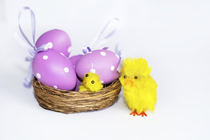 Ninho real com ovos da páscoa roxos imagem de stock