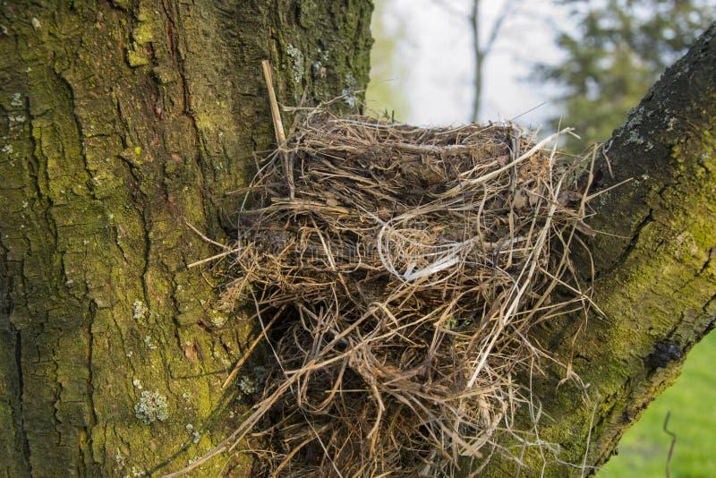 Ninho vazio na árvore imagens de stock