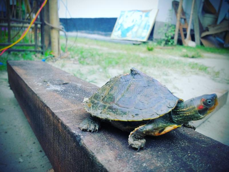 Ninja żółw obraz royalty free