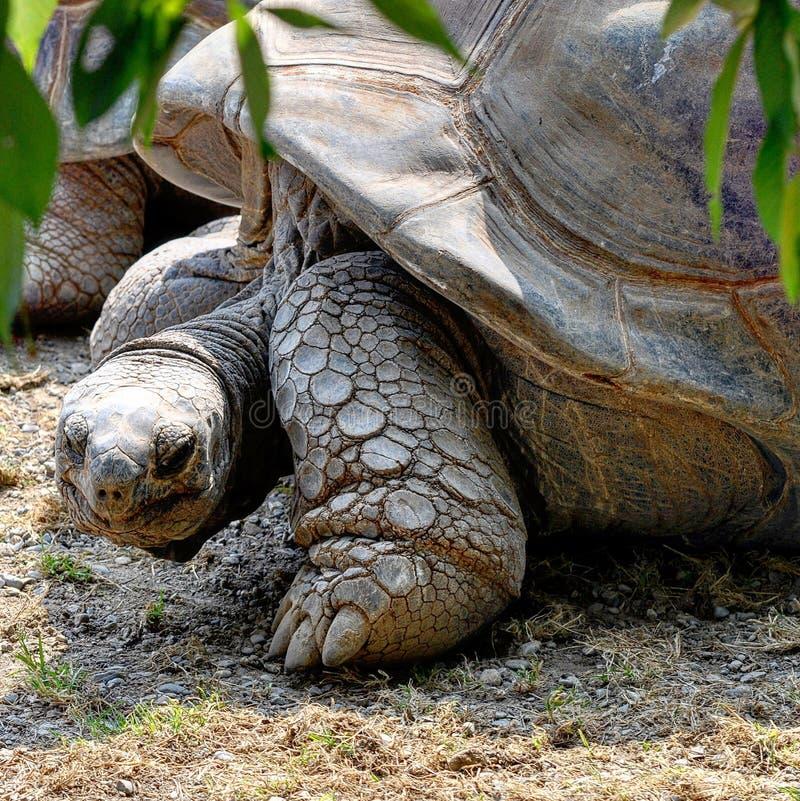 Ninja sköldpadda arkivfoton