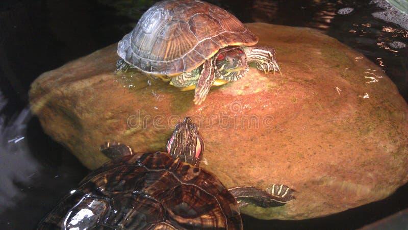 Ninja Turtles fotografie stock
