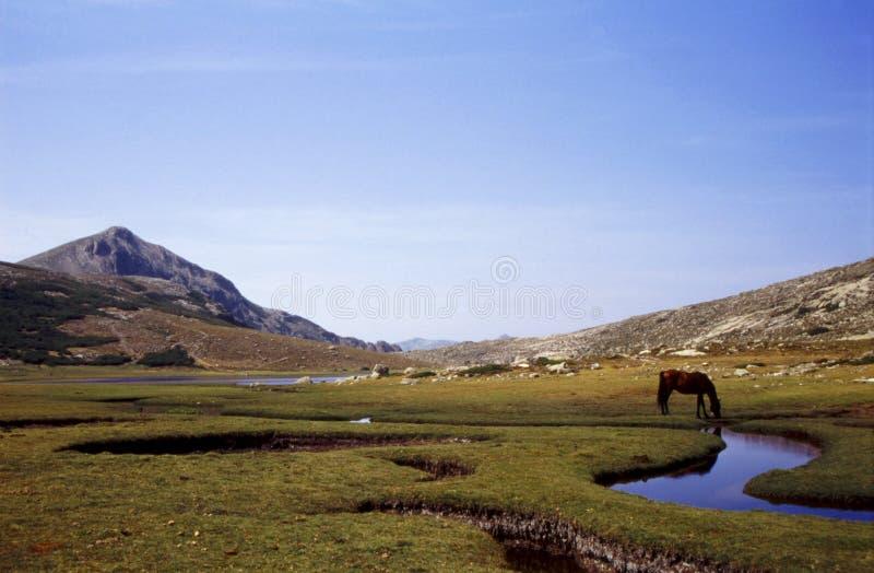 Nino del lago corsica foto de archivo