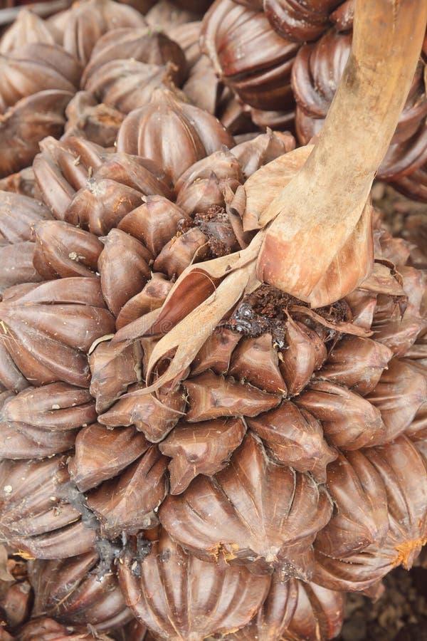 Nipa palm royalty free stock photo