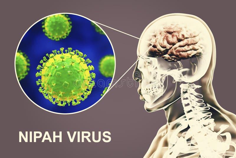 Nipah virus infection stock illustration