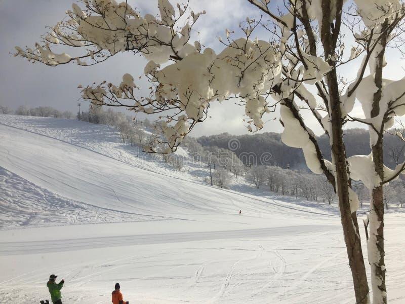 Niseko滑雪胜地 免版税库存图片