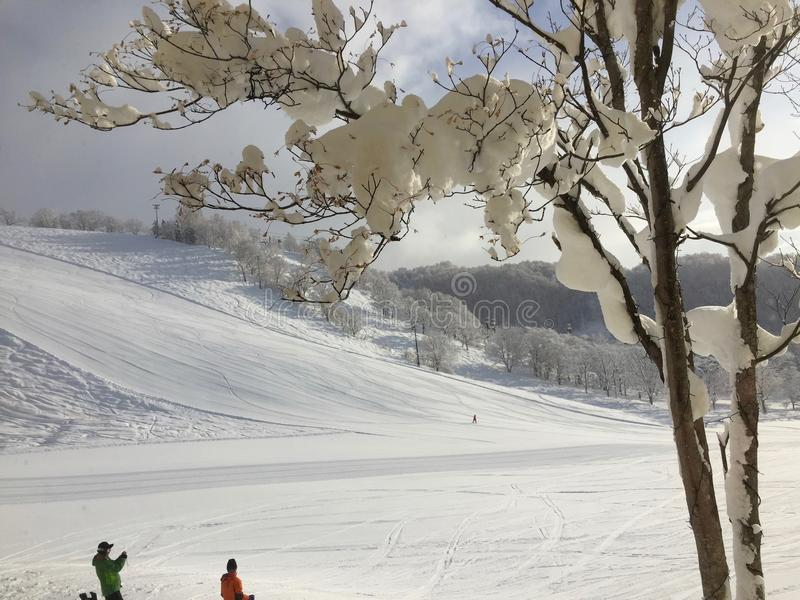 Niseko skidar semesterorten royaltyfria bilder