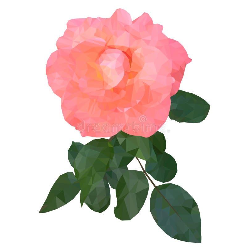 Niska poli- menchii róża Lato projekta botaniczny wektorowy sztandar Niski poli- piękny menchia kwiat Poligonalny wzrastał ilustracji