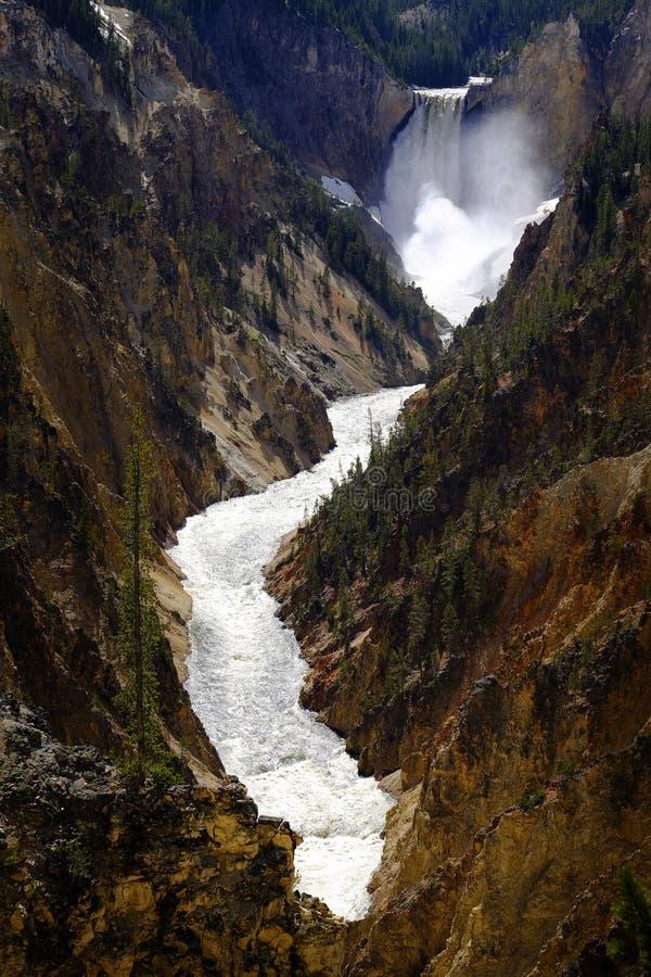Niska Yellowstone siklawa Spada w jaru parku narodowym fotografia stock