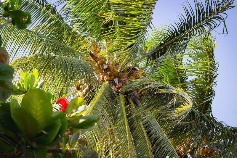 Niski kąt strzelający kokosowy drzewo zdjęcie royalty free