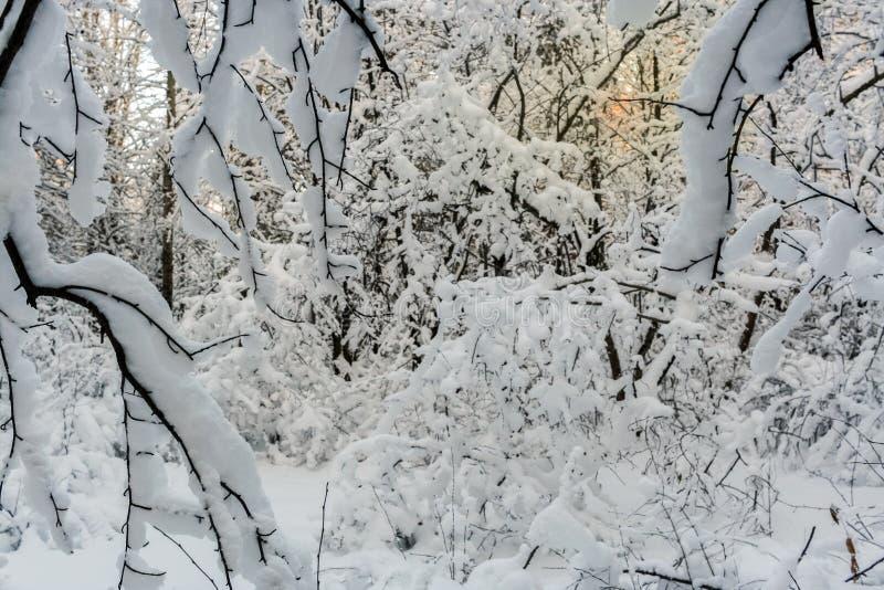 Niski zimy słońce błyszczy dimly przez nieprzejezdnego, kopiasty z zdjęcia stock
