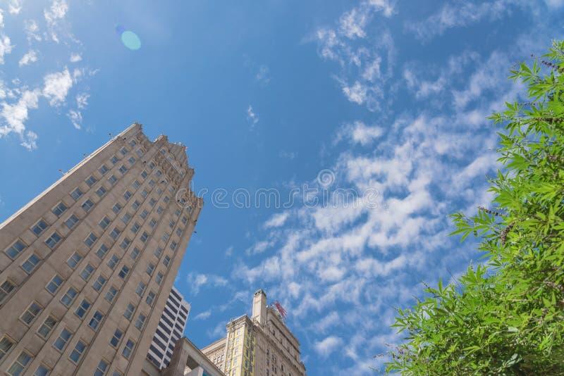 Niskiego kąta widok drapacz chmur z drzewami pod pogodnym obłocznym niebem zdjęcia royalty free