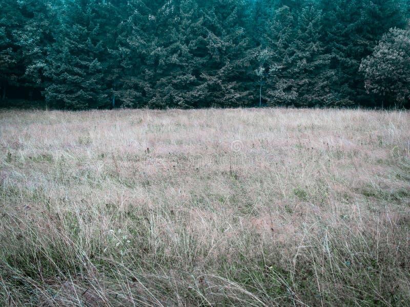 Niskiego kontrasta prosty las i łąkowy prosty natury tło zdjęcia royalty free