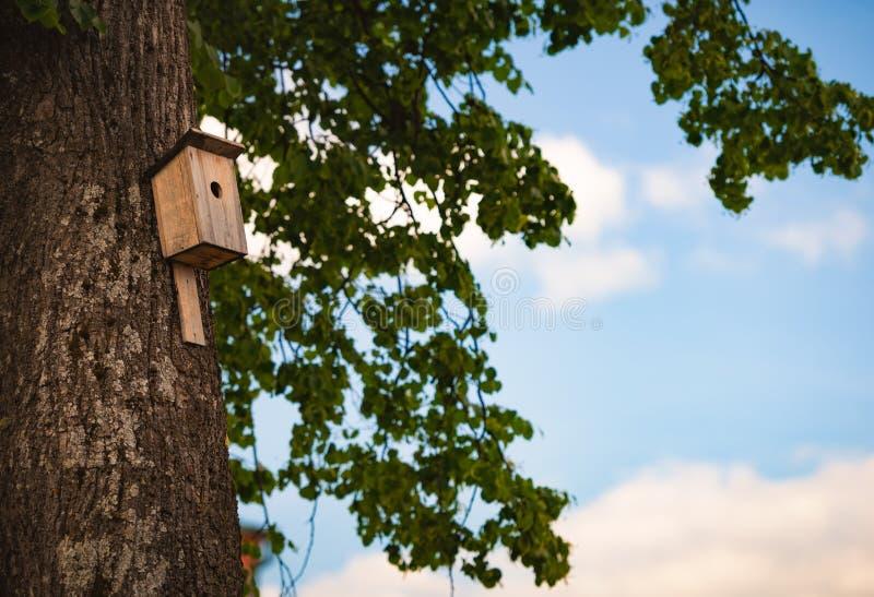 Nistkasten auf Wald des Baums im Frühjahr lizenzfreies stockbild
