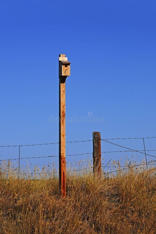 Nistkasten für westlichen blauen Vogel stockbild