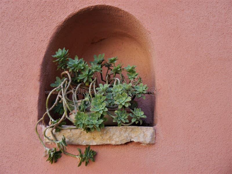 Nisza w różowej zewnętrznej ścianie dom z liść rośliną w garnku, bardzo dekoracyjnej, miejsce dla teksta fotografia stock