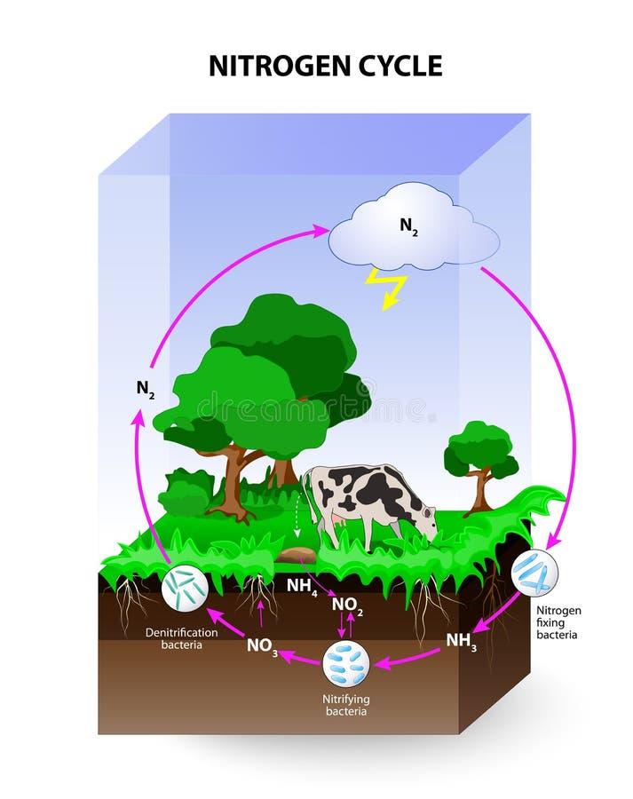 Nitrogen cycle stock illustration