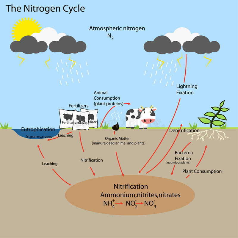 The Nitrogen Cycle. Vector illustrator and computer design stock illustration