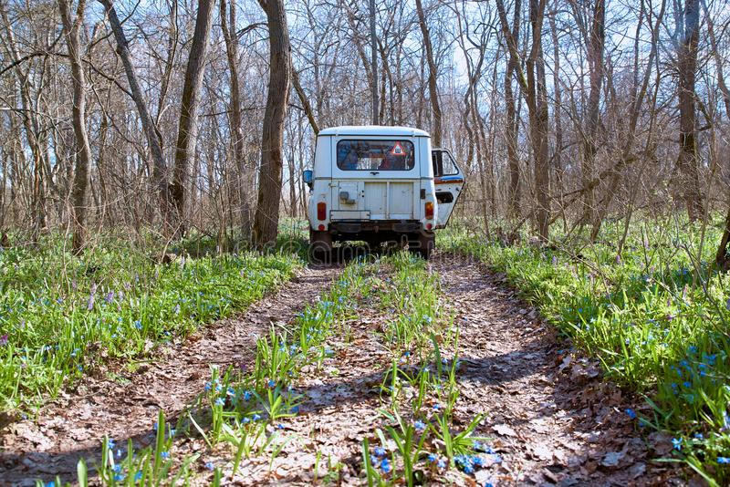 Niva car rides on a narrow winding forest road on a bright Sunny day. The path sprouted flowers and grass. First flowers in spring.  royalty free stock photo