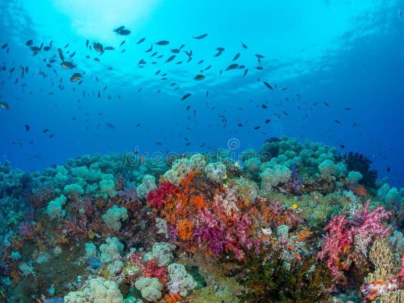 Niveaux inégalés de diversité marine Misool, Raja Ampat, Indon?sie image stock