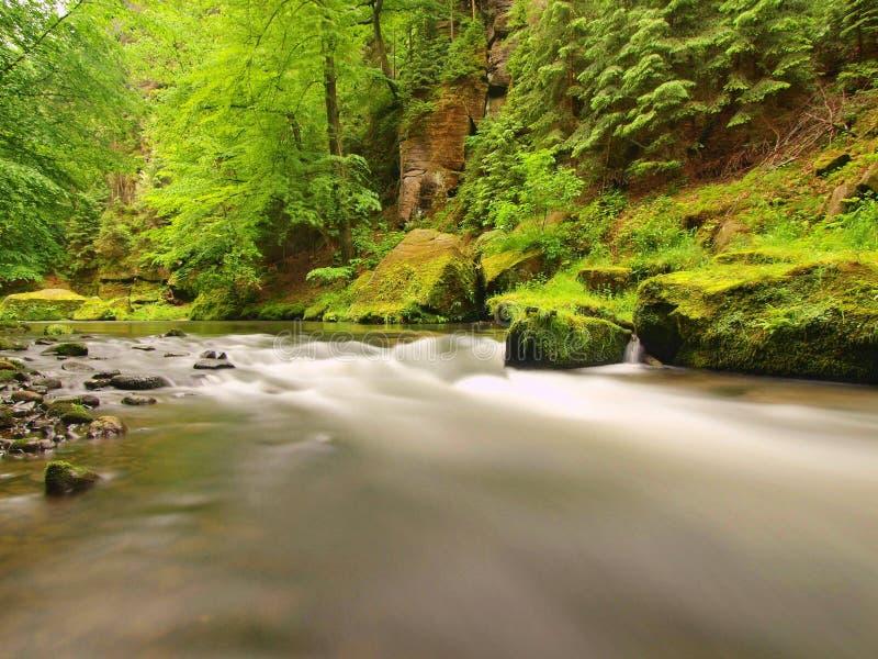 Nivel del agua debajo de rboles verdes frescos en el r o - Bater roca precios ...
