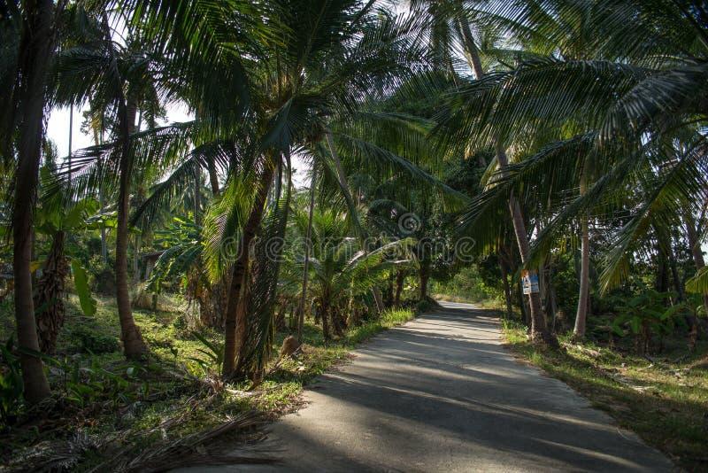 Nivelando a estrada obscuro no sol entre palmeiras imagem de stock royalty free