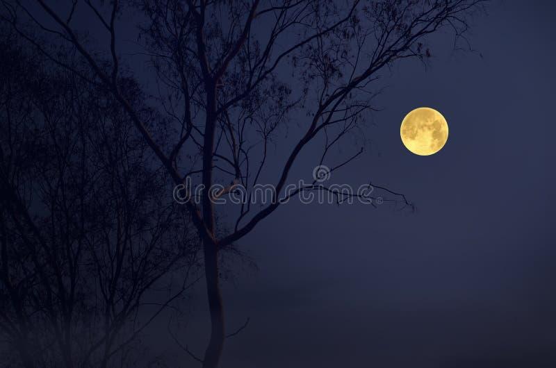 Nivelando a Lua cheia romântica no inverno imagens de stock