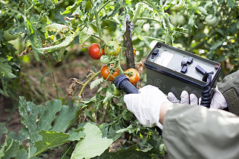 Niveles de radiación de medición de tomate fotografía de archivo libre de regalías