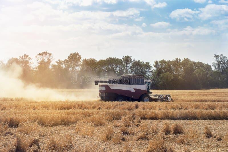 ?niwiarz maszyna zbiera? pszenicznego pola dzia?anie Syndykata ?niwiarza rolnictwa maszyna zbiera z?otego dojrza?ego pszenicznego obrazy royalty free