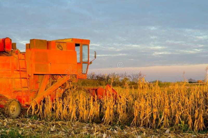 Żniwiarza syndykat zbiera kukurudzy na pogodnym letnim dniu obraz royalty free