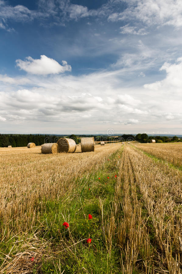 Żniwo - Contry scena - North Yorkshire - UK obrazy stock