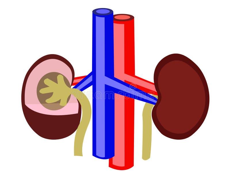 njure stock illustrationer