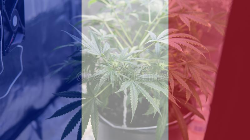 Nmedicinal cannabis use in France for recreational . France cannabis news in 2019 royalty free stock photography