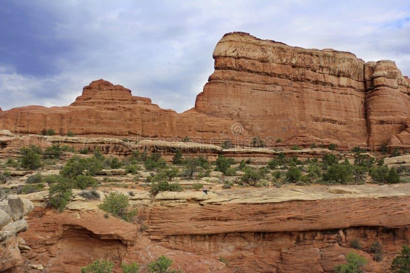 Nożny ślad w igłach, Canyonlands park narodowy, Utah, usa fotografia stock