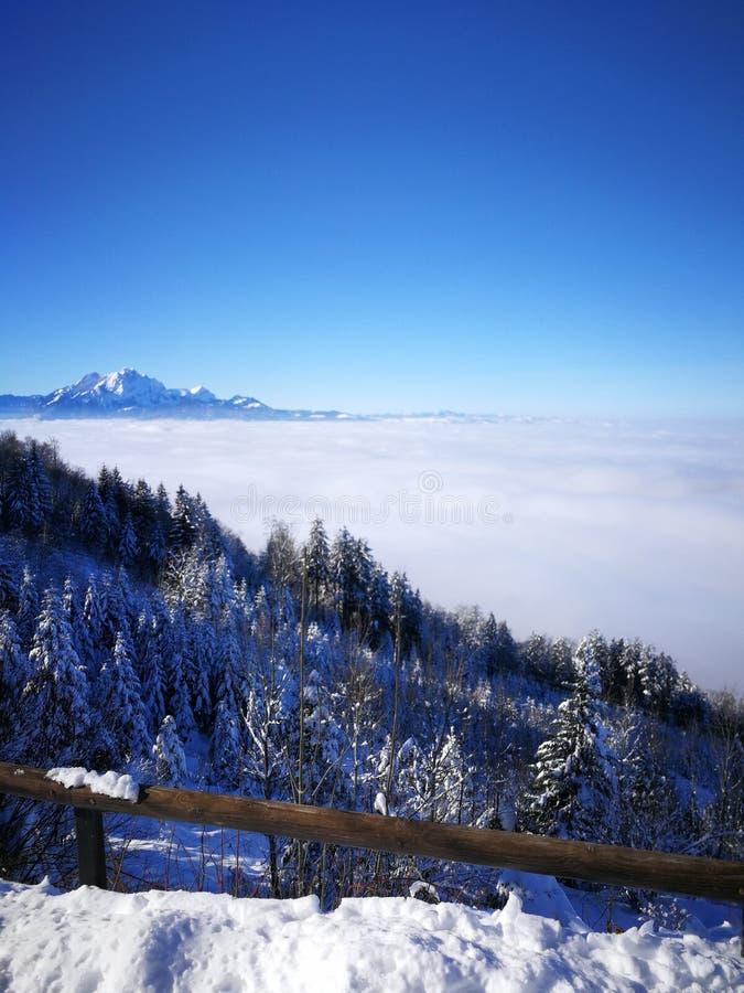 Noël brillant de forêt d'arbre du soleil de bleu de ciel d'hiver de nuage de neige image libre de droits
