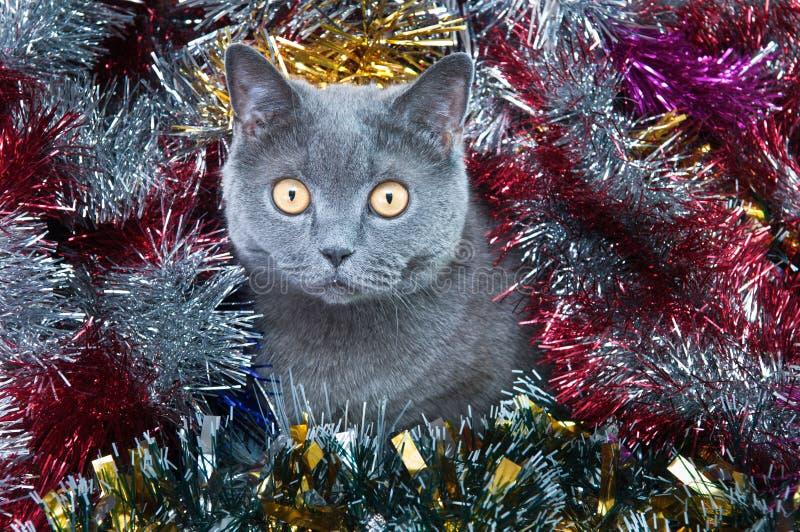 Noël britannique de chat photo libre de droits