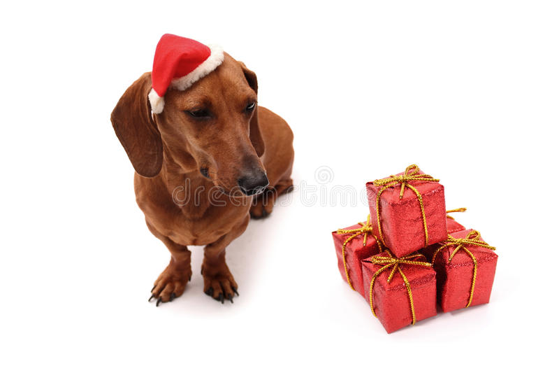 Noël de crabot images stock
