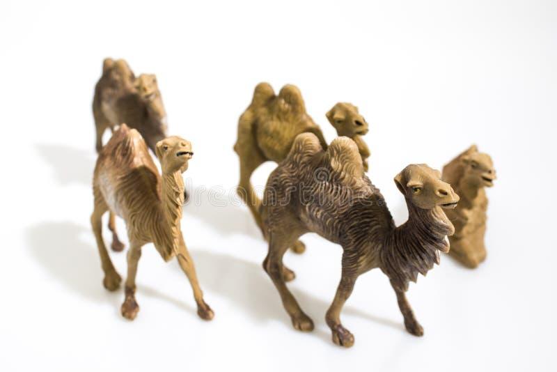 Noël objecte, les chameaux en plastique d'animaux pour le diorama i de nativité image stock