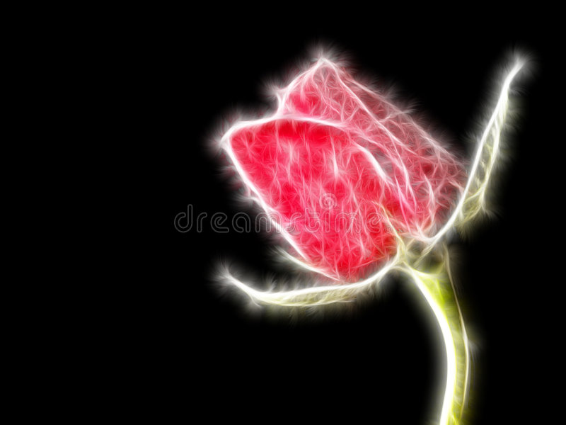 Noël Rose images libres de droits