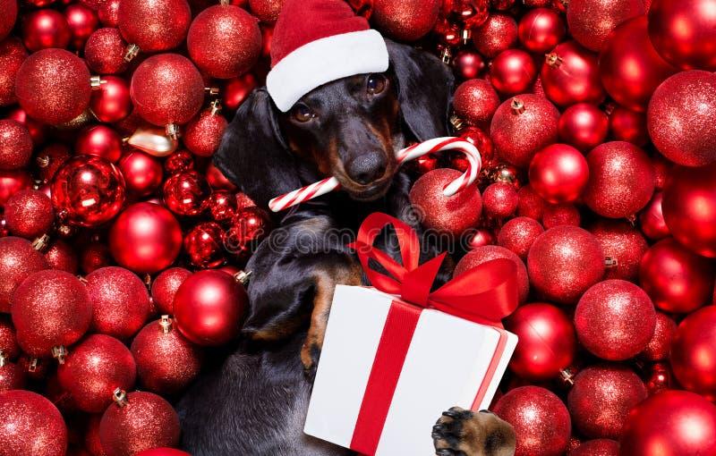 Noël santa claus chien et xmas bals ou baubles en arrière-plan photos libres de droits