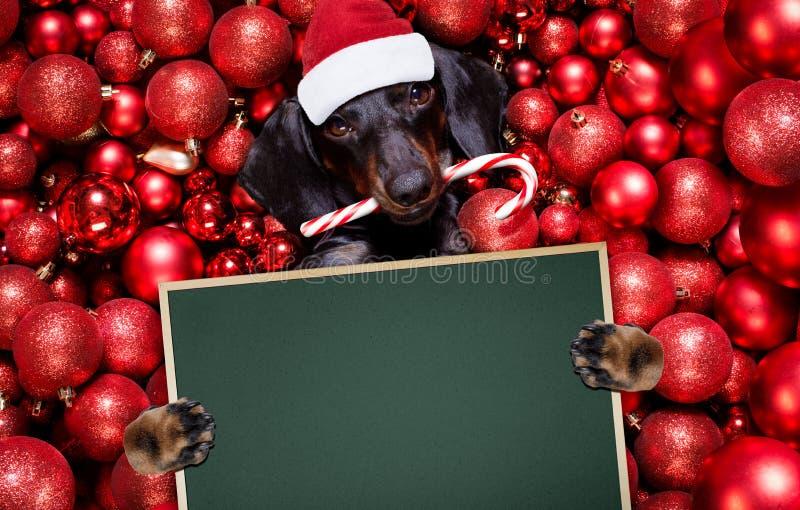 Noël santa claus chien et xmas bals ou baubles en arrière-plan images libres de droits