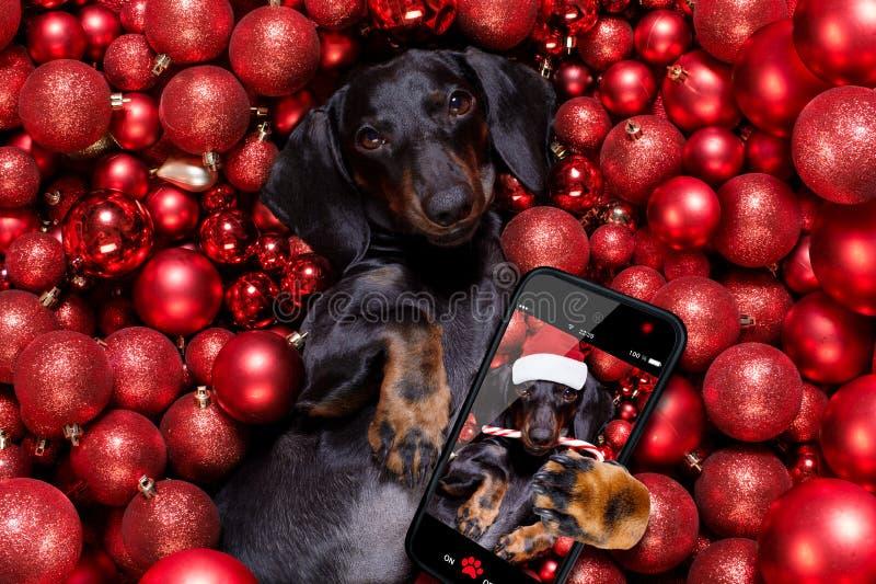 Noël santa claus chien et xmas bals ou baubles en arrière-plan photographie stock