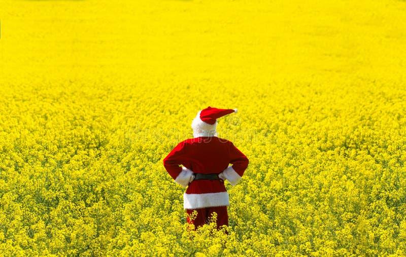 Noël Santa Claus dans le domaine jaune de floraison images stock