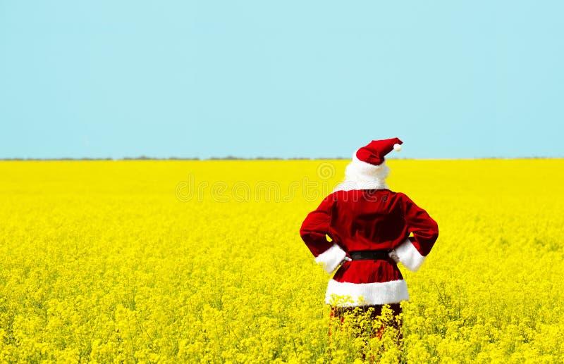 Noël Santa Claus dans le domaine jaune de floraison photographie stock