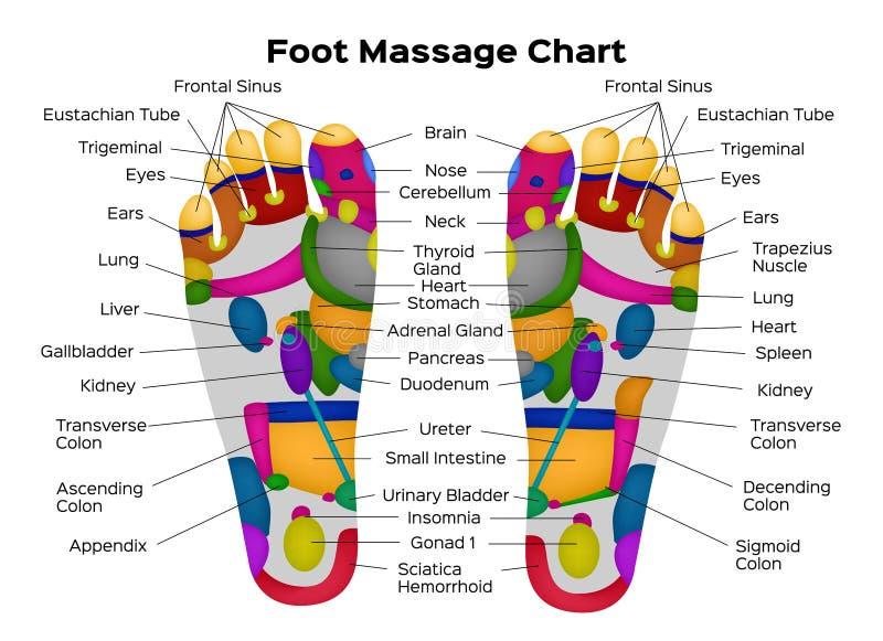 Nożna refleksologii mapa z opisem wewnętrzni organy części ciała i również zwrócić corel ilustracji wektora anatomia royalty ilustracja