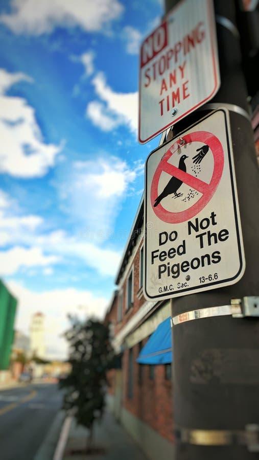 No alimente las palomas fotografía de archivo libre de regalías