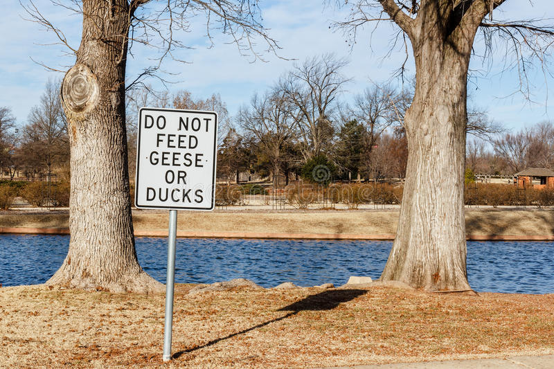 No alimente los gansos imagen de archivo