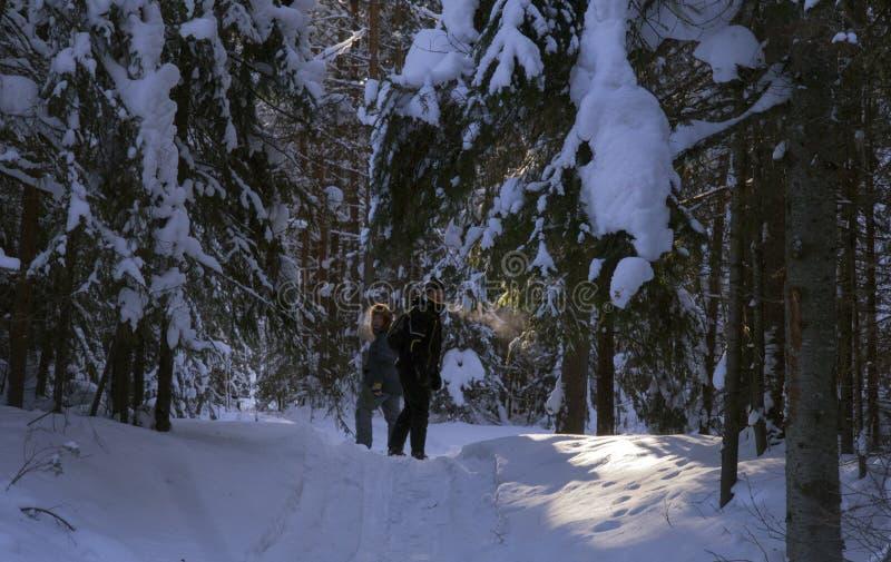 No bosque sagrado foto de stock